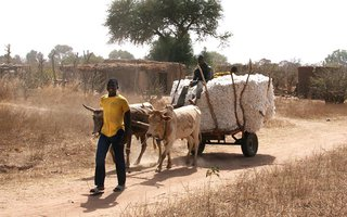 UC Davis Development Economics research in Burkina Faso, Africa.
